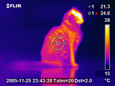 <p>Thermogram of a domestic cat showing increased temperature near brain and in face.</p> <h6><strong>From:</strong> Wikimedia Commons (image captured by <em>Lcamtuf</em>)</h6>
